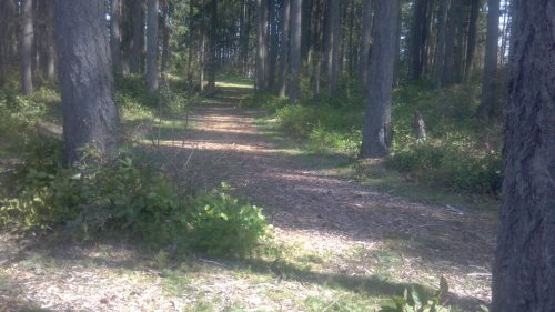 The Woods (2)